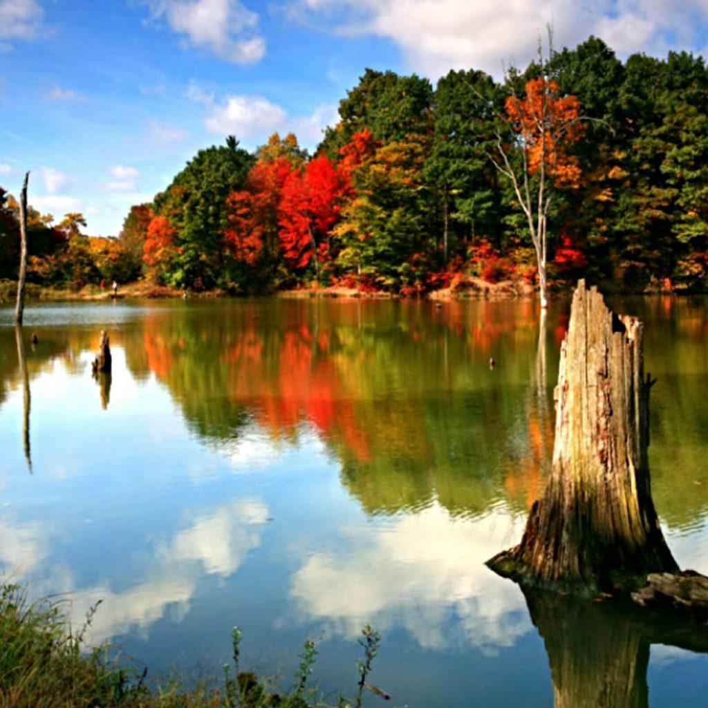 Alum Creek Lake Dog Park